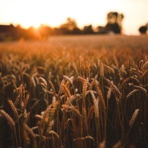 Estudiar Máster en Desarrollo Rural